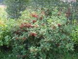 Садово-огородная тематика фото...